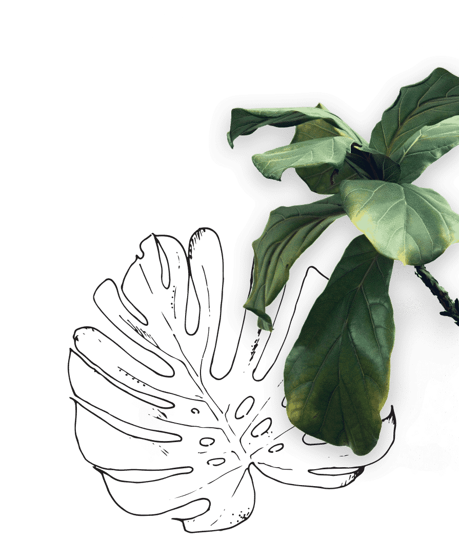 The Watering Can - Cutout Monstera Leaf & Fig Leaf