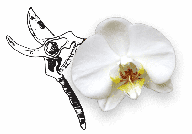 The Watering Can | Isolated image of an orchid.